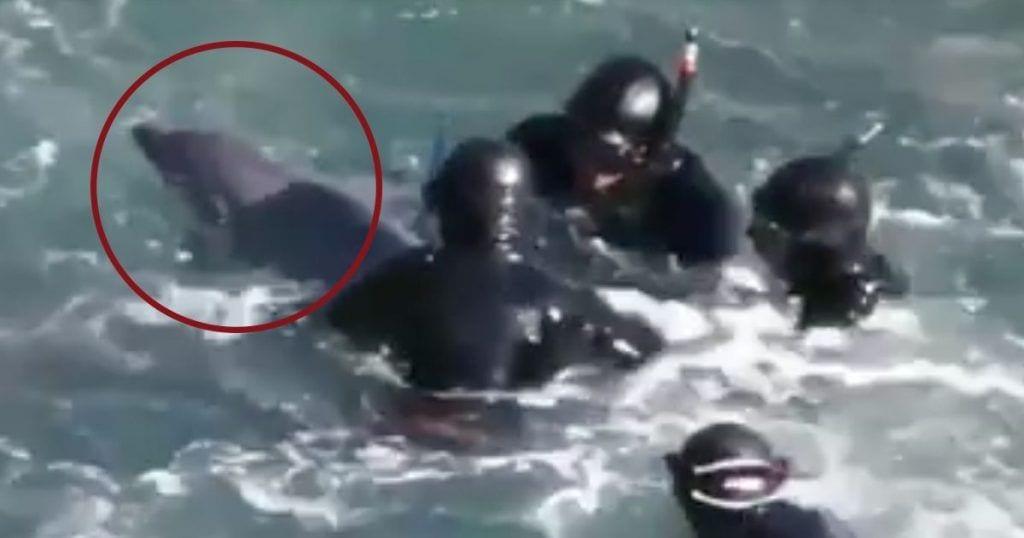 delfin captura acuario dest