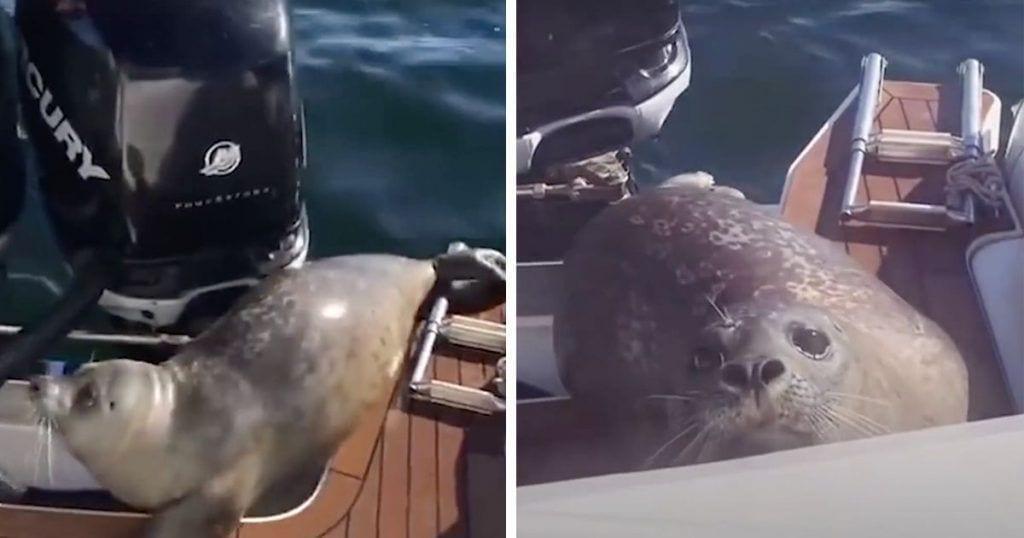 foca orcas barco dest