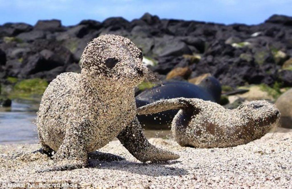 leones marinos arena destacada