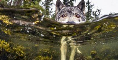 lobos de mar destacada