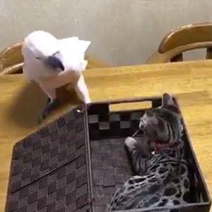 Loro le da una lección a un gato