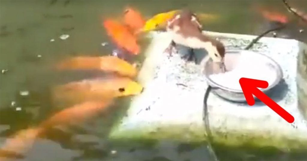 pato reparte comida
