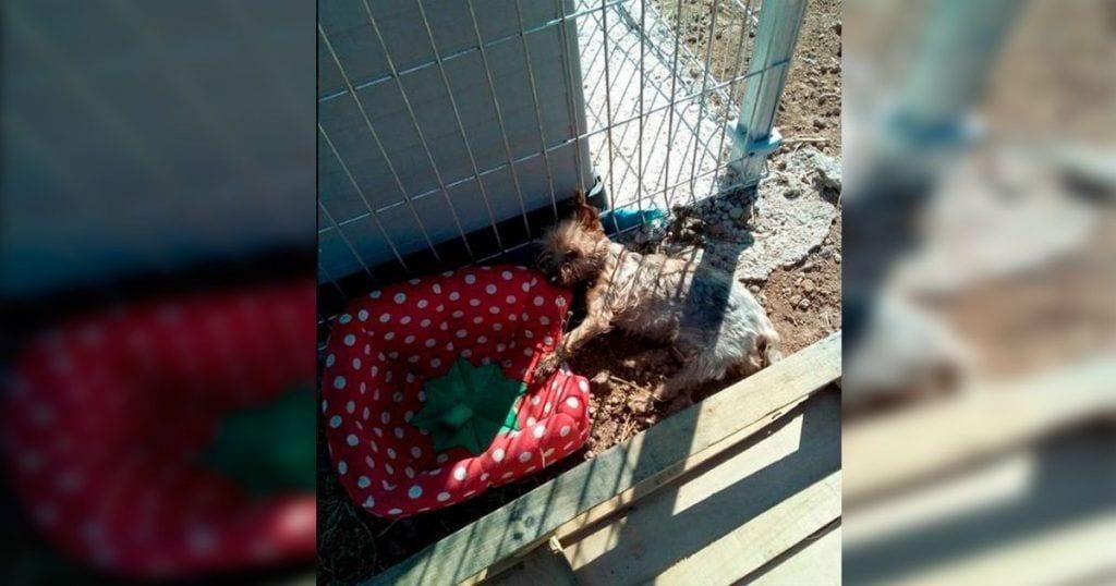 perra muere abandonada