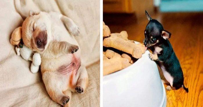 perritos pequenios