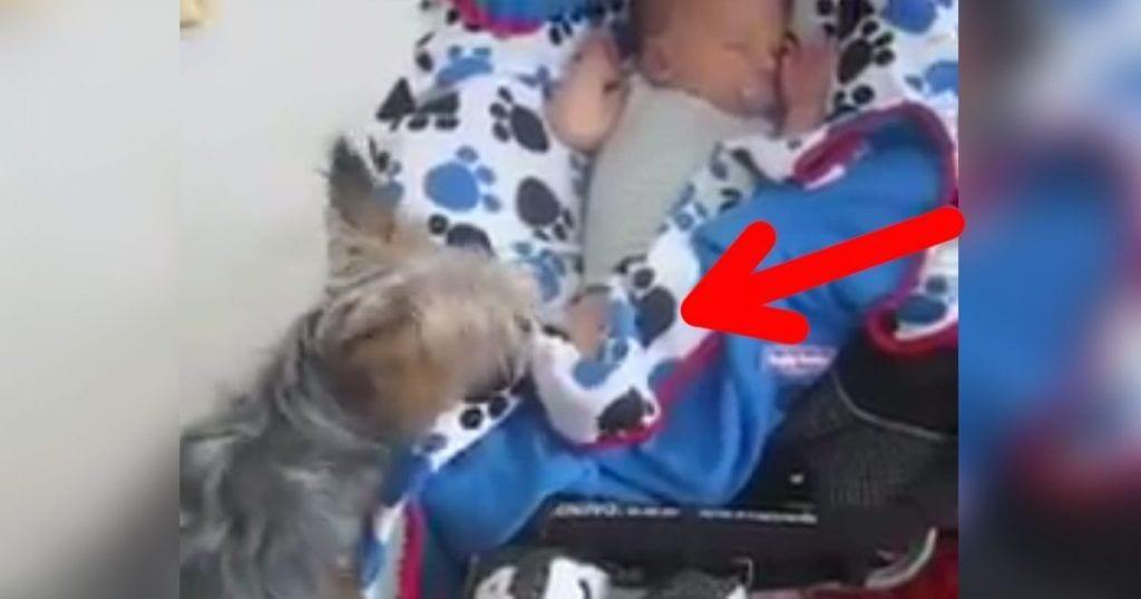perro-arropa-bebe