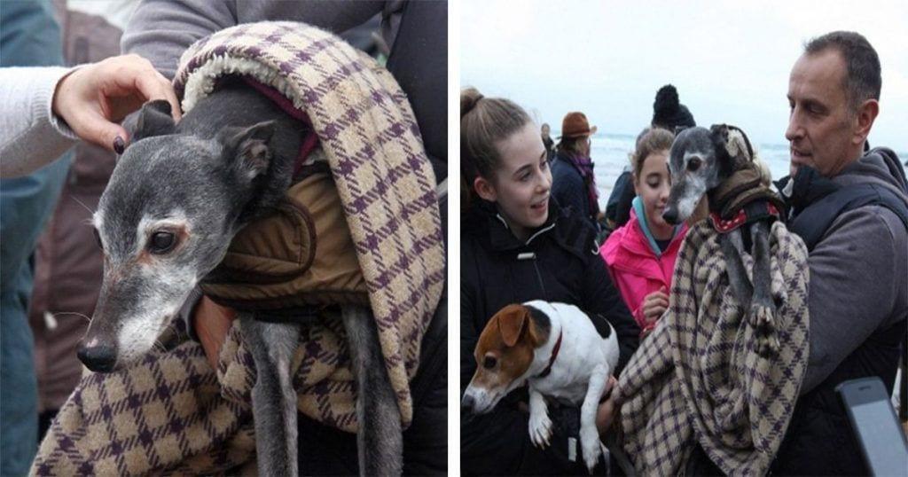 Este perro tenía que ser sacrificado pero su dueño consiguió darle la mejor despedida