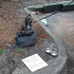 Encuentran familia de perro abandonado