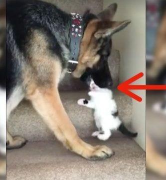 perro gato destacada