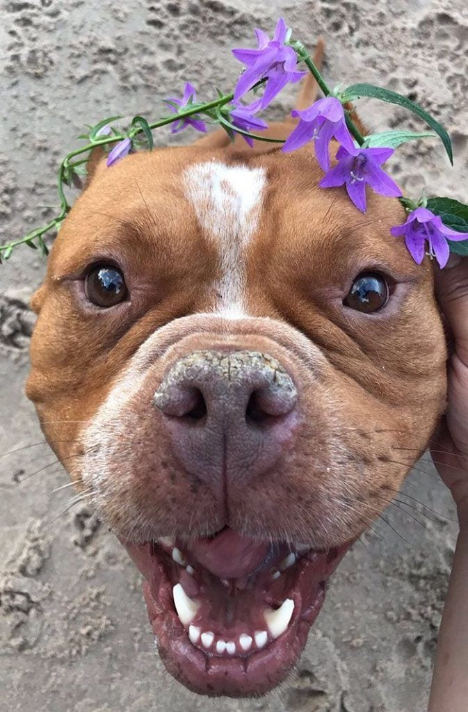 perros-adoptados-02