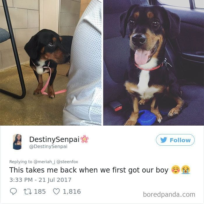 perros-adoptados-03