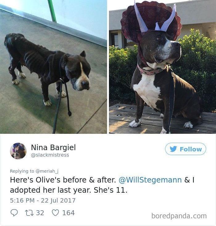 perros-adoptados-04