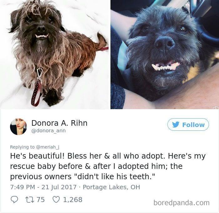 perros-adoptados-05