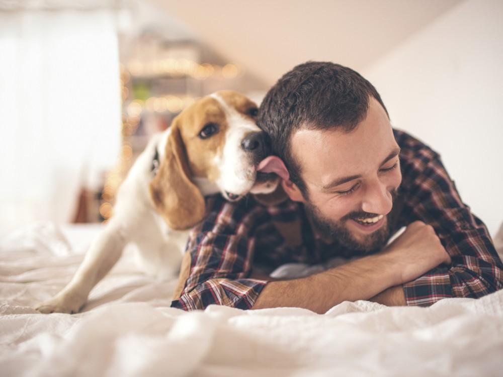 perros-salud1
