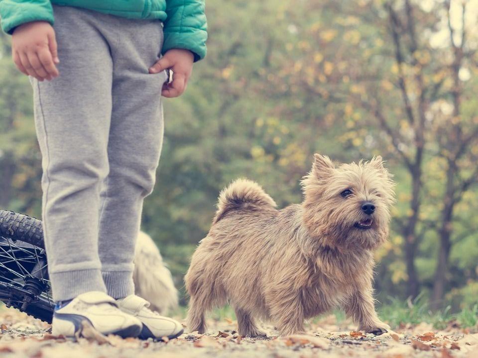perros-salud14