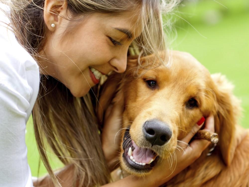perros-salud3