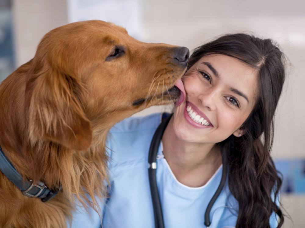 perros-salud6