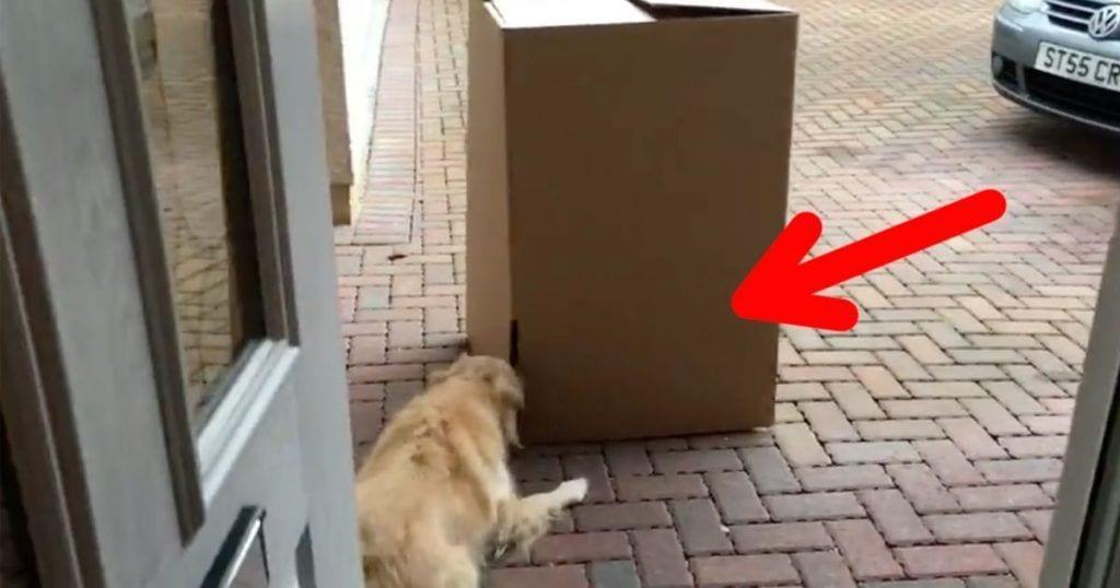 sorpresa perro
