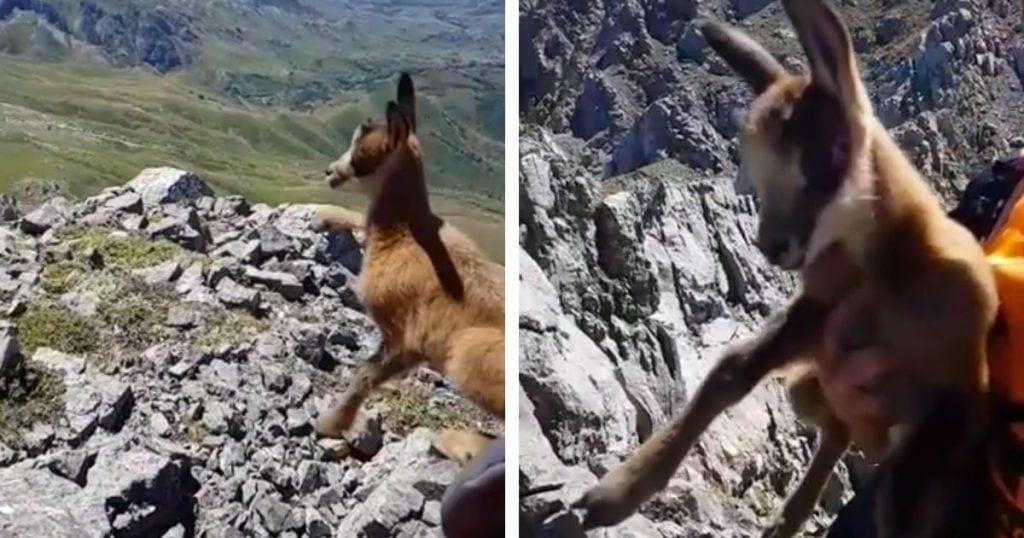 tocar animales salvajes