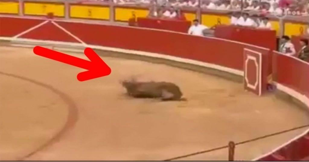 Este toro sufre una fuerte herida al salir a la plaza y nadie hace nada por ayudarle