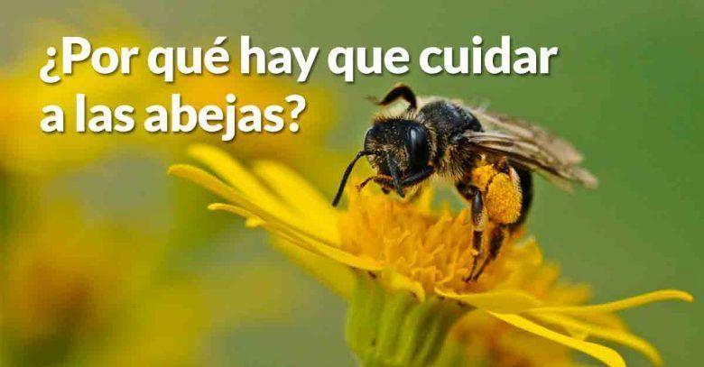 abejas-dest