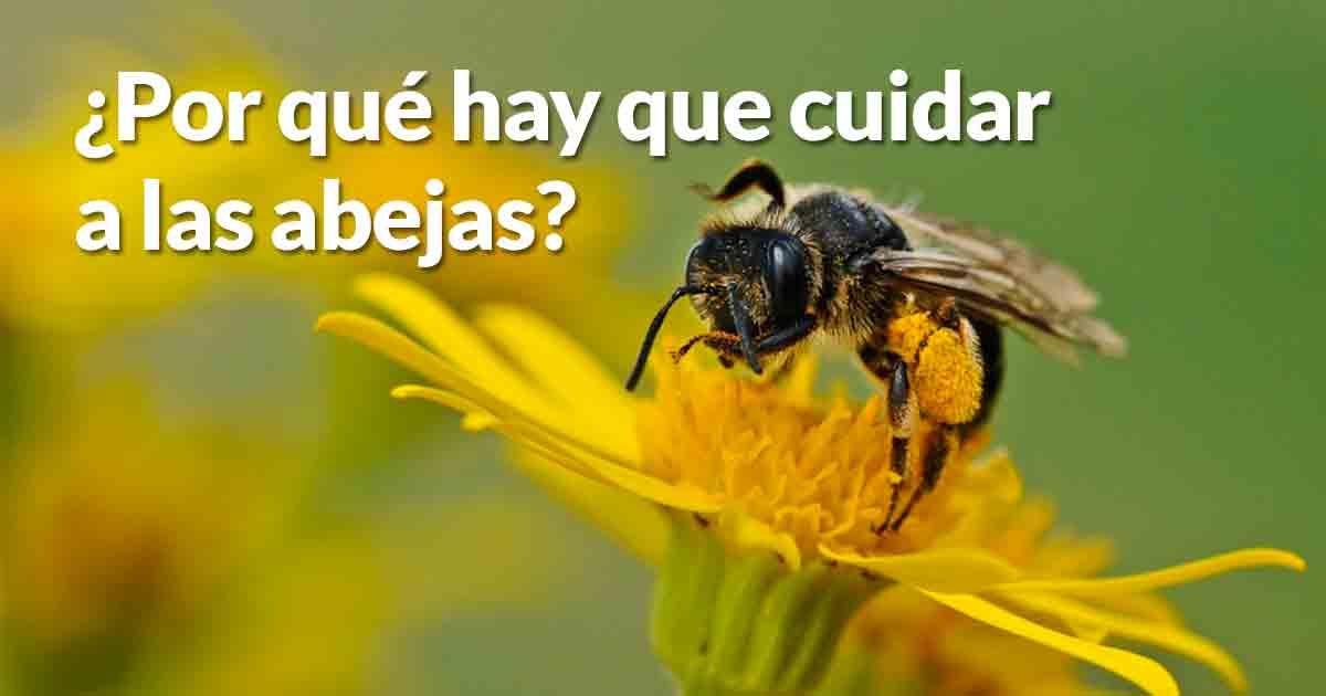 abejas dest