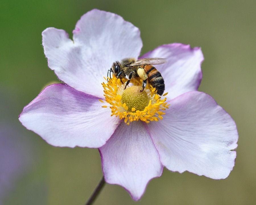 abejas_02