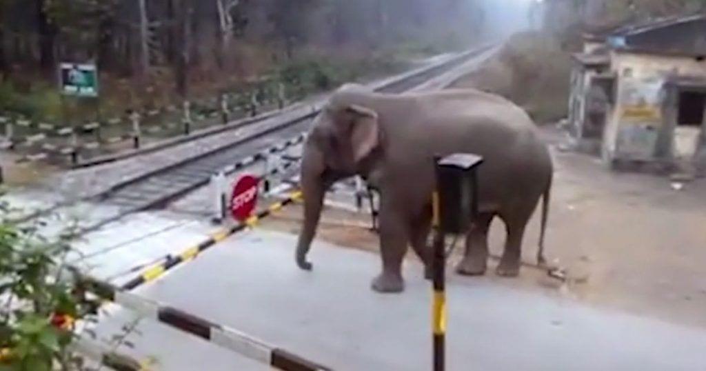 elefante-listo