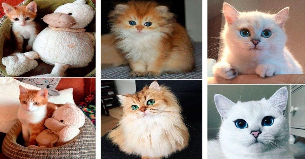 gatos cambiados