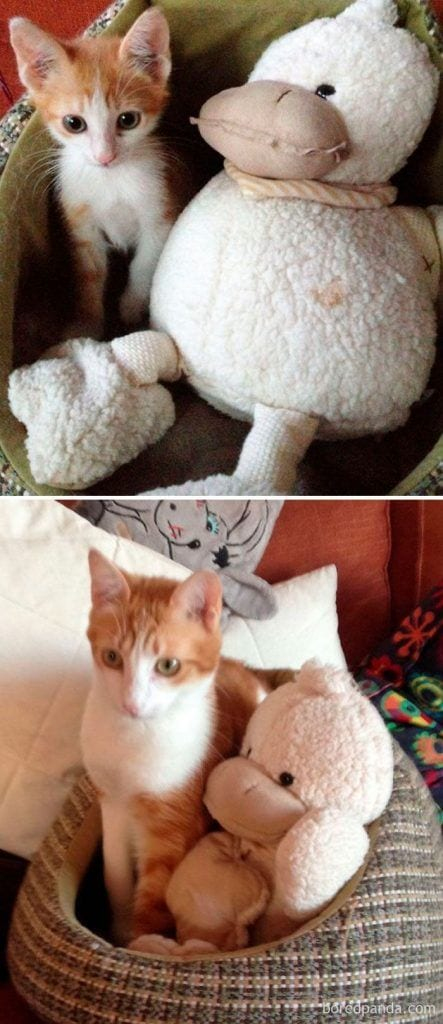 gatos-cambiados11