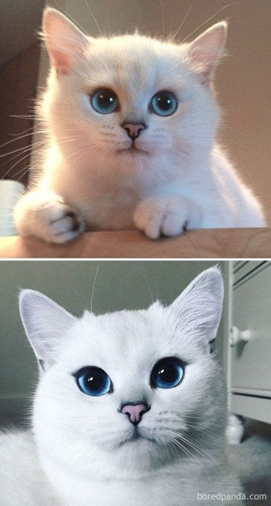 gatos-cambiados2