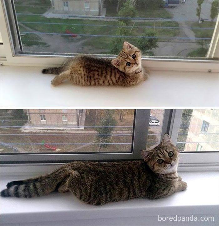 gatos-cambiados4