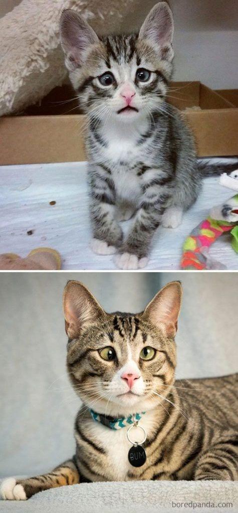 gatos-cambiados5