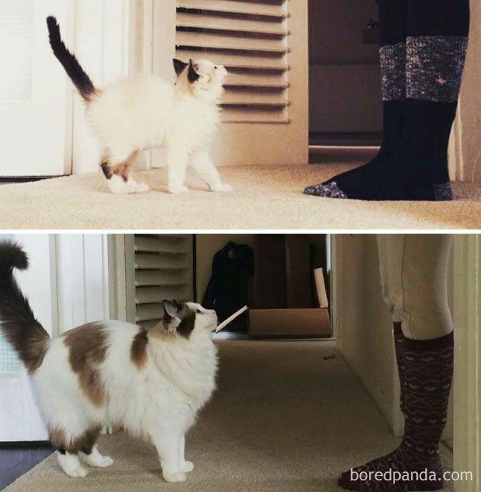 gatos-cambiados7