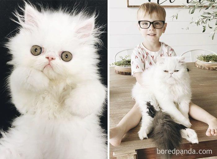gatos-cambiados8