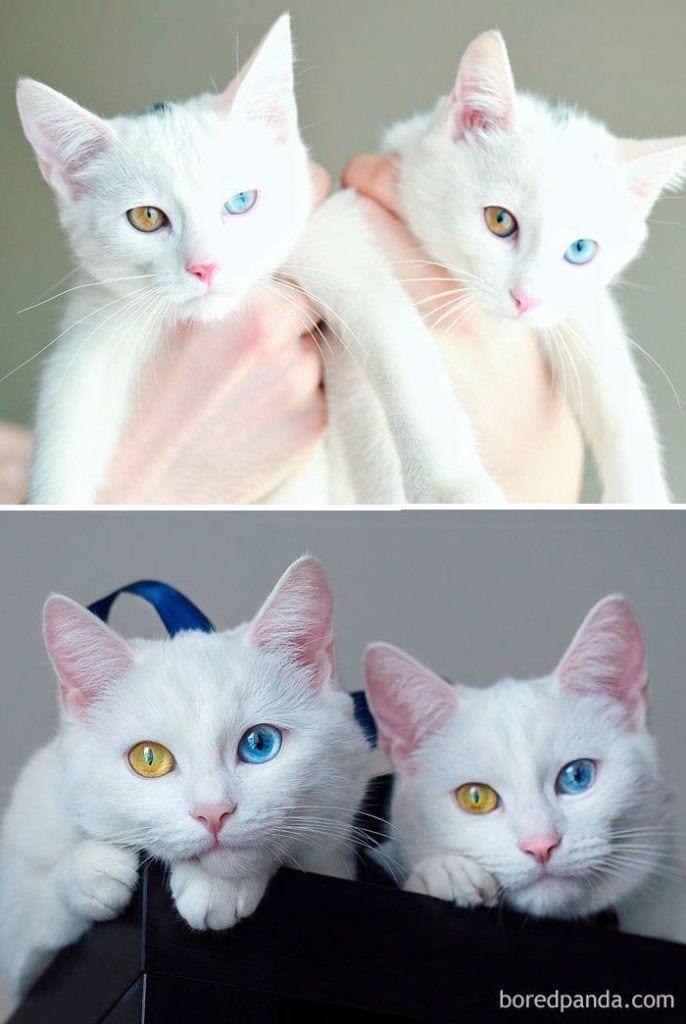 gatos-cambiados9