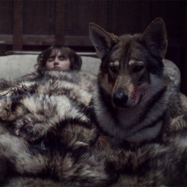 huskies-juego-tronos-02