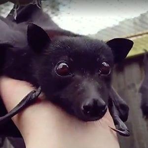 Los murciélagos pueden ser adorables