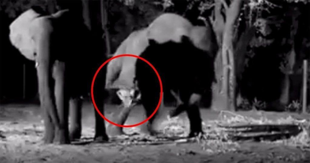 nacimiento elefante destacada
