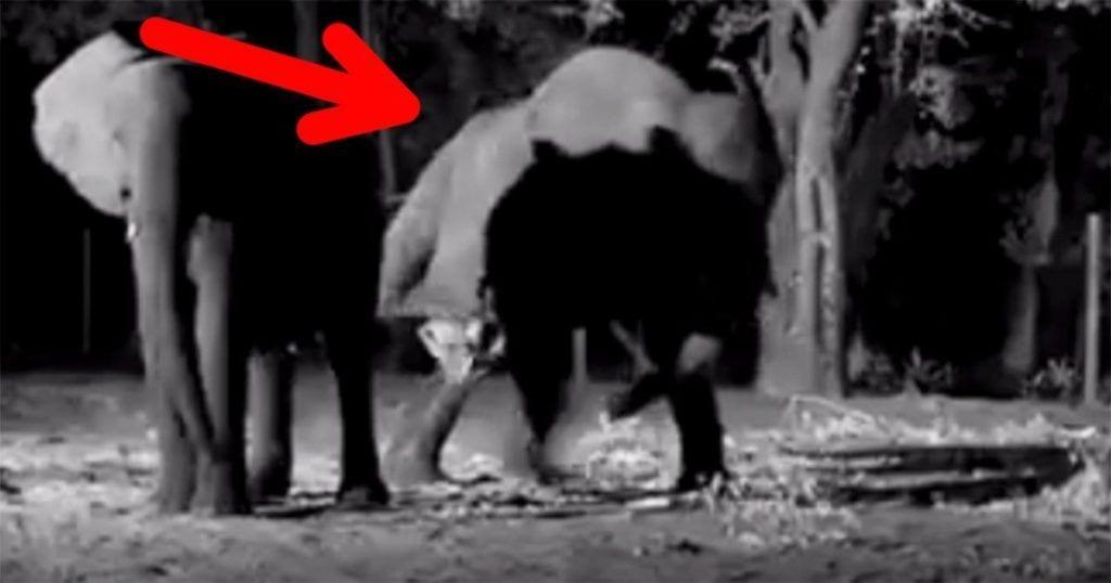 La increíble reacción de este elefante en el nacimiento de su cría que sin duda, te sorprenderá