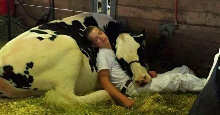 ninio vaca durmiendo destacada