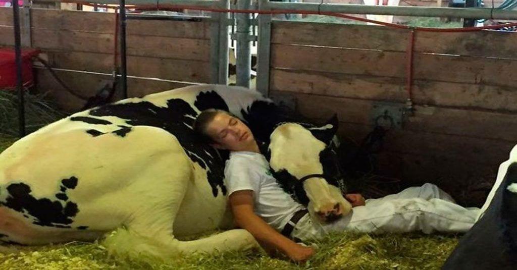 Este niño y su vaca fueron captados en su momento más relajante
