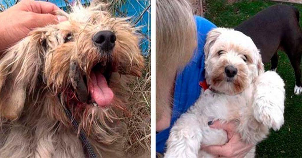 Este perro callejero pudo ser rescatado y ahora disfruta de una nueva vida