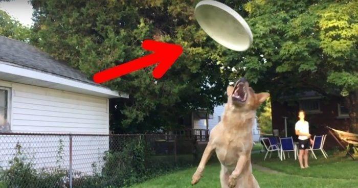 perro frisbee