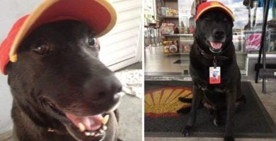 perro gasolinera portada
