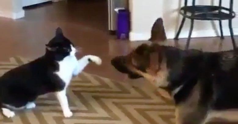 perro-gato-pelea-final-inesperado-dest