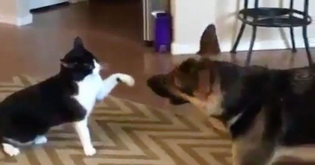 perro gato pelea final inesperado dest