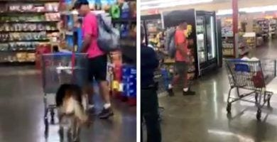 perro supermercado destacada