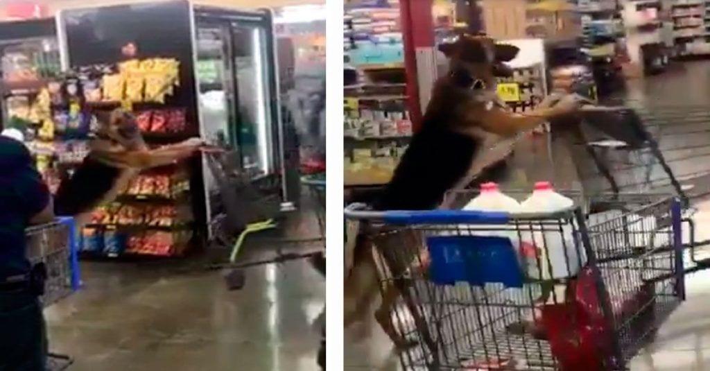 Este perro se ha convertido en el mejor ayudante a la hora de hacer la compra