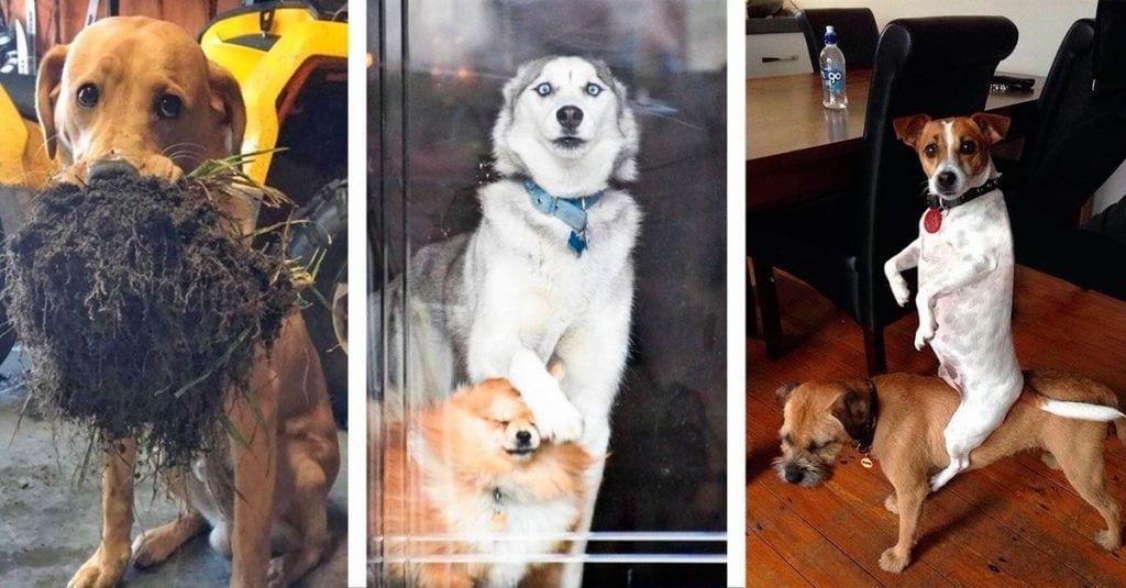 perros momentos graciosos destacada