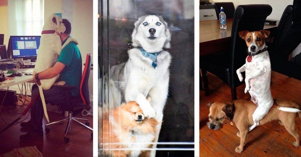 10 perritos que fueron inmortalizados en el momento más divertido